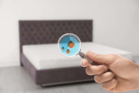 Photo pour Woman with magnifying glass detecting bed bugs on mattress, closeup - image libre de droit