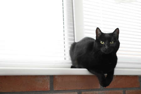Foto de Adorable black cat near window with blinds indoors. Space for text - Imagen libre de derechos