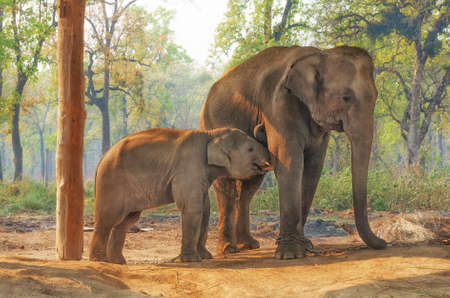 Photo pour Elephant Breeding Centre in Chitwan, Nepal - image libre de droit