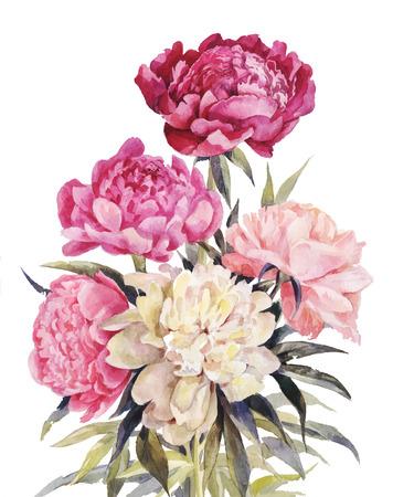 Illustration pour Bouquet of peonies watercolor. Hand-drawn illustration for vintage greeting card - image libre de droit