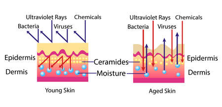 Illustration pour Effect of environment on the skin, vector diagram for cosmetological illustration - image libre de droit