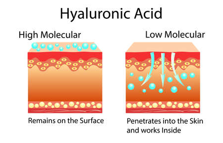 Illustration pour Vector illustration with Hyaluronic acid in skin-care products. Low molecular and High molecular. - image libre de droit