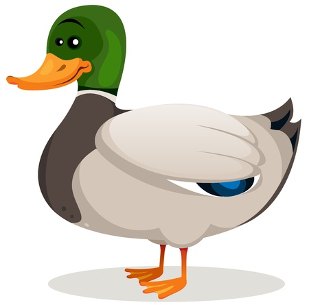 Illustration of a cartoon mallard duck with green neck and grey feather with beautiful blue shades