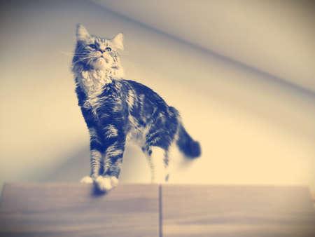 Photo pour Cat on the roof - image libre de droit