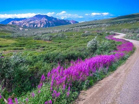 Foto de Spectacular landscape seen from the shuttle bus, the only means of transport that can make the gravel road inside the park. Denali National Park in summer, Alaska, USA. - Imagen libre de derechos