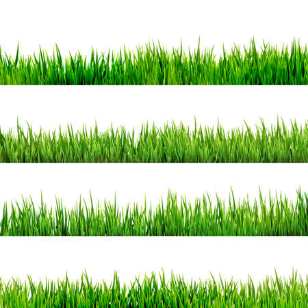 Illustration pour Grass isolated on white   - image libre de droit