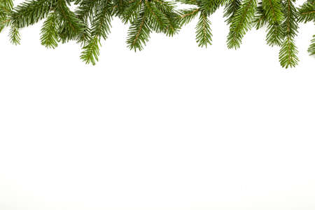 Photo for Fir branch isolated on white - Royalty Free Image
