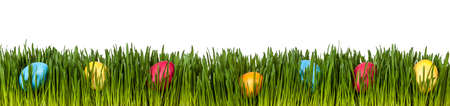 Photo for Easter eggs in grass on white - Royalty Free Image