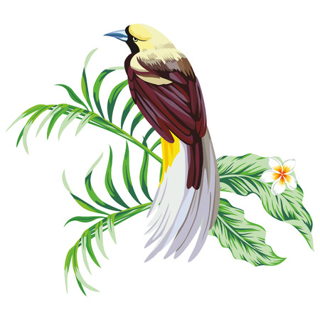 Illustration for Exotic single tropical bird with plant flower print wallpaper white background - Royalty Free Image