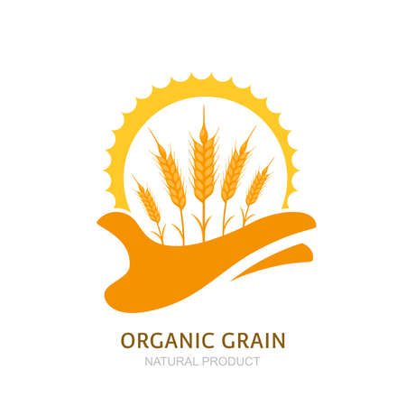 Illustration pour Human hand holding wheat ears and sun. Vector  label, package design elements. Barley, or rye illustration. Concept for agriculture, organic cereal products, harvesting grain and farming. - image libre de droit