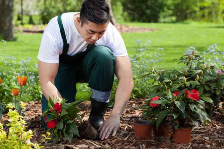 Foto de Planting flowers in a beautiful green garden - Imagen libre de derechos