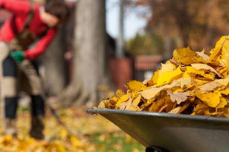 Photo pour View of autumnal leaves in a garden - image libre de droit