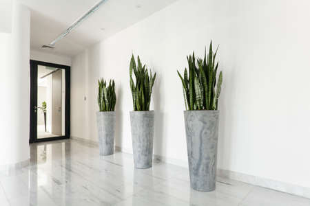 Photo for Beauty plants on corridor in business office - Royalty Free Image