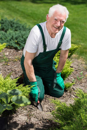 Photo for Retired man cultivating the garden in sunny day - Royalty Free Image
