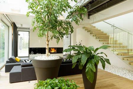 Photo pour Shot of plants in a modern living room - image libre de droit