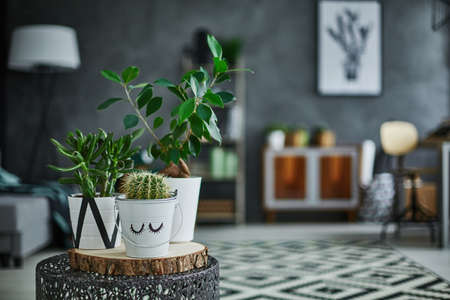 Photo for Decorative green houseplant in pot standing on metal table - Royalty Free Image