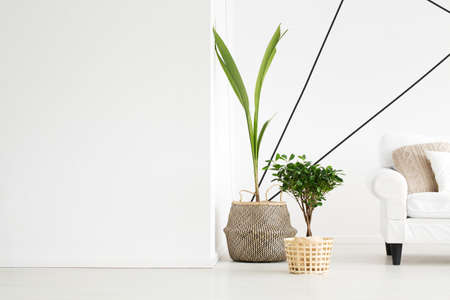 Photo pour Green fresh plants standing in the corner of the room - image libre de droit
