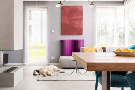 Photo for Light beige couch, table, fireplace, artwork, bright windows and purple accent in contemporary living room with dog sleeping on the rug - Royalty Free Image