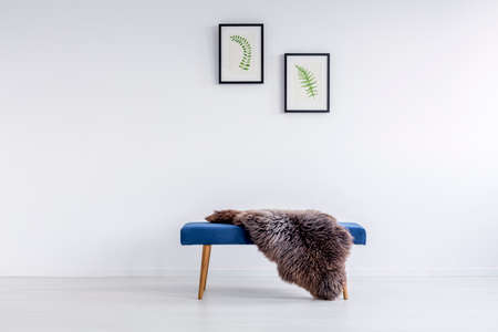Foto de Furry rug thrown on blue hallway bench in room with posters hanging on white wall - Imagen libre de derechos