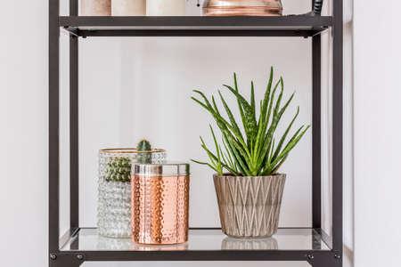 Foto de Close-up of aloe plant in patterned pot and copper box on glass shelf - Imagen libre de derechos