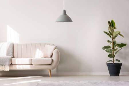 Foto de Grey lamp and ficus near beige settee with pillow and blanket in white living room interior with copy space - Imagen libre de derechos