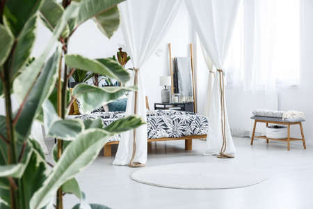 Photo for Close-up of blurred ficus plant leaves in botanic bedroom interior with canopy tied with rope - Royalty Free Image