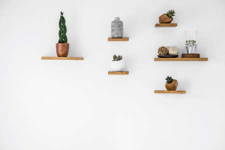 Photo pour Cacti on wooden shelves in empty interior with copy space on white wall - image libre de droit