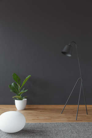 Foto de Living room interior with green plant in a white pot and metal lamp set on black, empty wall - Imagen libre de derechos