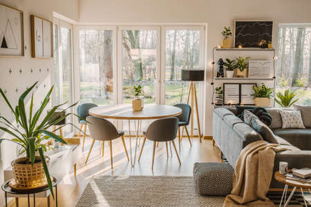 Foto de Plant in bright open space interior with chair at dining table near grey sofa and patterned pouf - Imagen libre de derechos