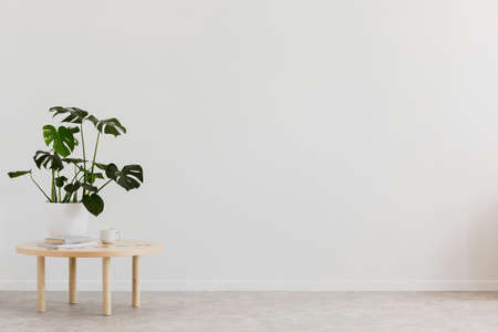Photo for Plant on wooden table against white empty wall with copy space in living room interior. Real photo. Place for your furniture - Royalty Free Image