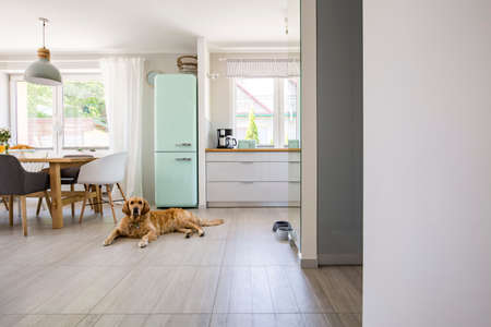 Foto de Dog in front of mint fridge in spacious interior with kitchen and chairs at dining table. Real photo - Imagen libre de derechos