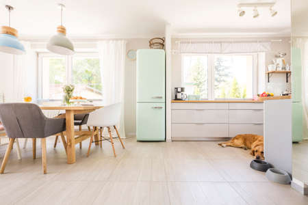 Foto de Chairs at table under lamps in bright kitchen interior with fridge and dog next to cabinets. Real photo - Imagen libre de derechos