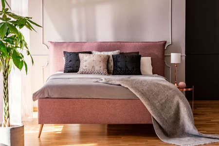 Photo pour Black and grey pillows on pink bed in pastel bedroom interior with palm and lamp. Real photo - image libre de droit