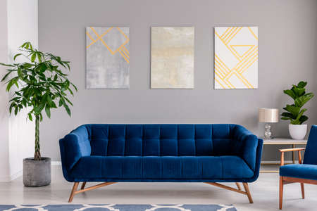 Foto de A dark blue velvet couch in front of a gray wall with graphic paintings in a modern living room interior. Real photo. - Imagen libre de derechos