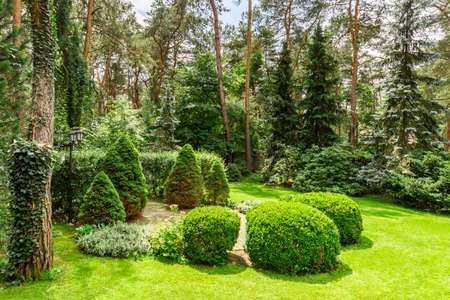 Foto de Green grass, bushes and trees in the garden during sunny day - Imagen libre de derechos
