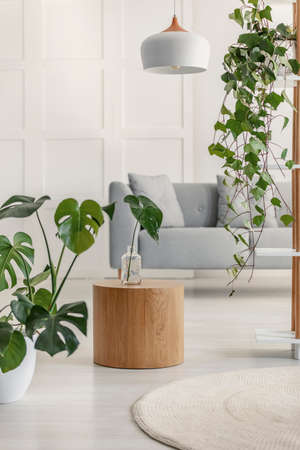 Photo for Plants and wooden table in a white living room interior - Royalty Free Image
