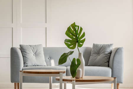 Foto de Monstera deliciosa on coffee table and grey sofa in a simple living room interior - Imagen libre de derechos