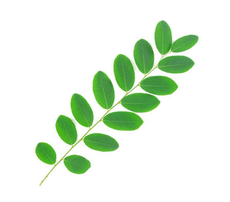 Photo pour green leaf isolated on white background, Moringa leaves - image libre de droit