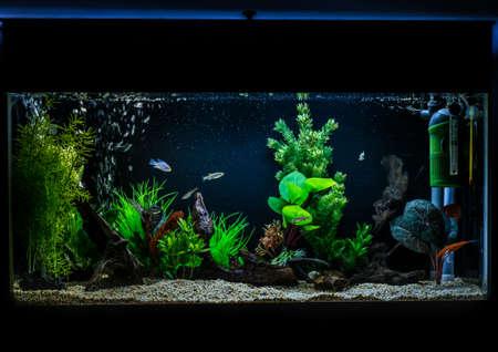 Photo pour A shot of a 40 gallon, 3ft long tropical fish aquarium. - image libre de droit