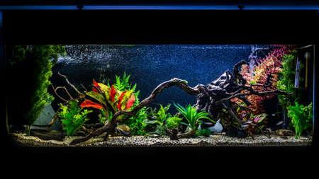 Foto de A shot of a 55 gallon, 4ft long tropical fish aquarium. - Imagen libre de derechos