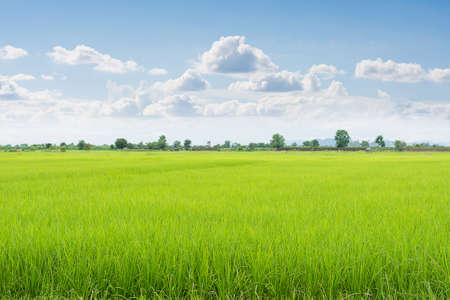 Foto de Green field and sky with white clouds. - Imagen libre de derechos