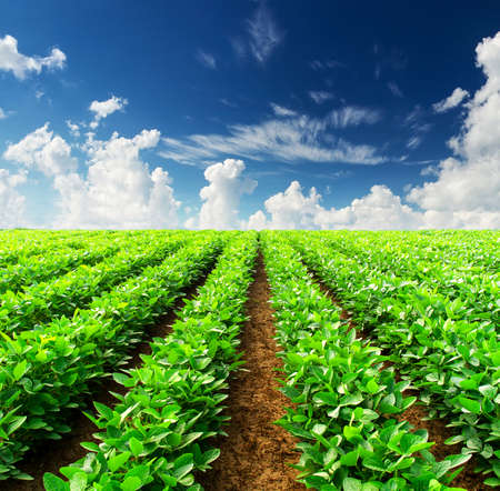 Photo for Rows on field  Agricultural landscape - Royalty Free Image