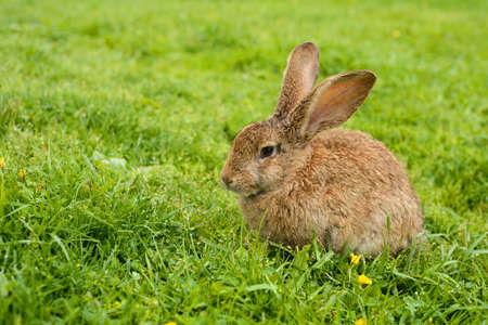 Photo for Rabbit on grass. Composition with animals - Royalty Free Image