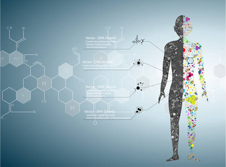 Illustrazione per Molecule body concept of the human DNA Eps10 - Immagini Royalty Free