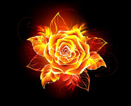 Illustration pour Blooming rose from fire and flame on black background.  - image libre de droit