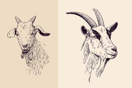 Illustration for goat, hand drawn illustration, portrait - Royalty Free Image