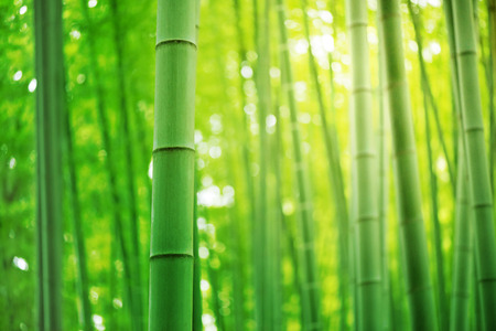 Photo for Bamboo forest, Tourism to Japan - Royalty Free Image