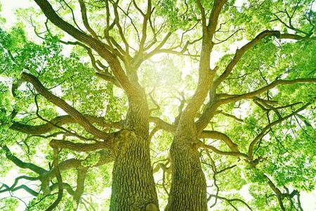 Foto de Big tree in a forest. Fresh green and ecology - Imagen libre de derechos
