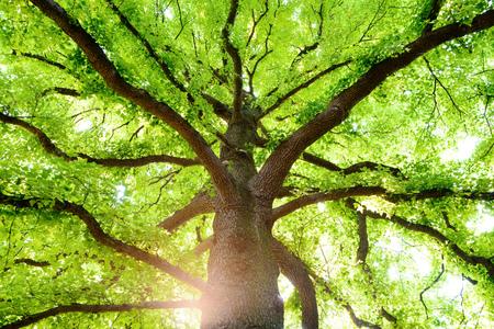Foto de Deep forest trees and sunlight - Imagen libre de derechos