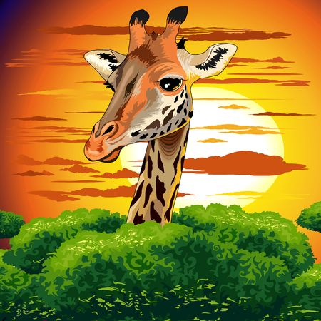 Illustration pour Giraffe on Wild African Savanna Sunset - image libre de droit
